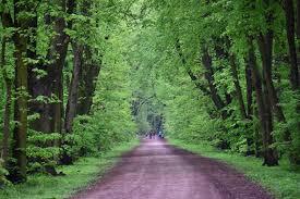 Zdjęcie z jednego z lasów w Warszawie